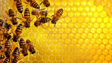 تصویر از خواص و فواید فوق العاده عسل