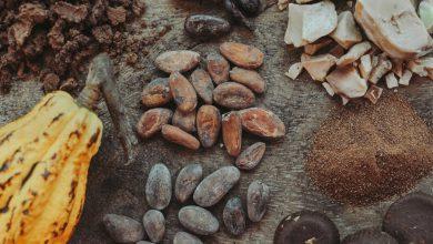 تصویر از کاکائو؛ خواص و فواید کاکائو؛ عوارض جانبی مصرف کاکائو