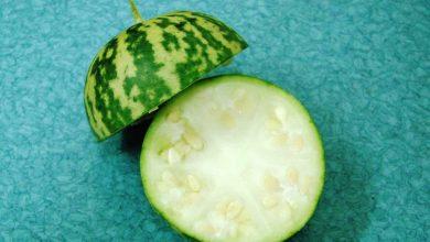 تصویر از هندوانه ابوجهل چیست و چه خواصی دارد؟ طریقه مصرف هندوانه ابوجهل