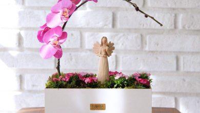 تصویر از معرفی گل ارکیده؛ نماد گل ارکیده؛ روش کاشت و نگهداری ارکیده