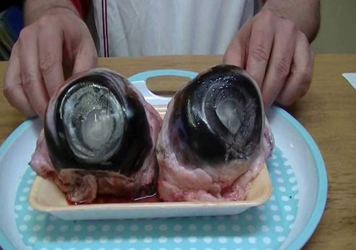چشم ماهی تُن