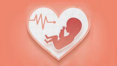 تصویر از زمان تشکیل قلب جنین؛ برای تشکیل قلب جنین چه بخوریم؟