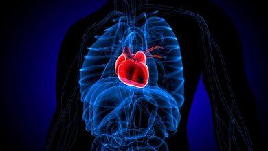 تصویر از التهاب عضله قلب (میوکاردیت)؛ علل، علائم، پیشگیری و درمان گیاهی آن