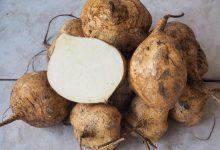تصویر از جیکاما چیست؟ خواص جیکاما + ارزش غذایی