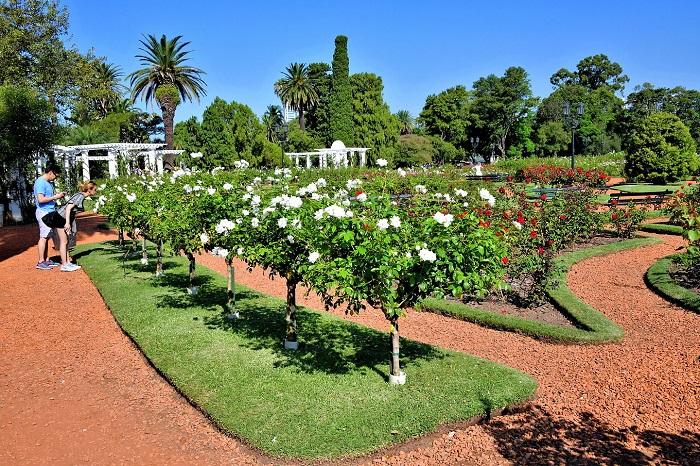 گل رز باغ پالرمو (Palermo rose garden)