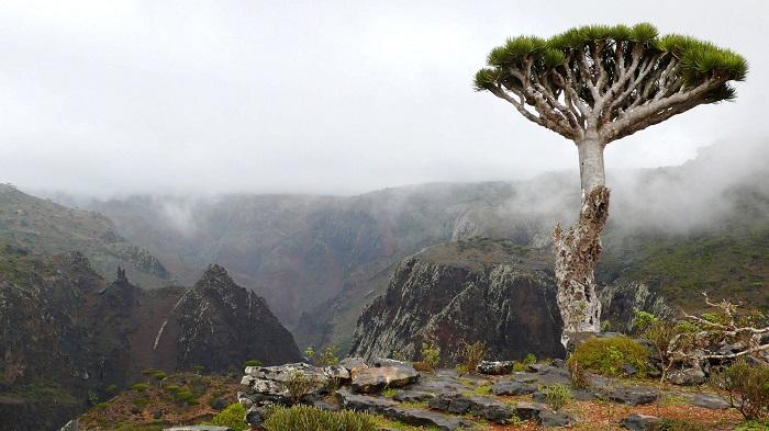 مجمع الجزایر Socotra در کشور یمن