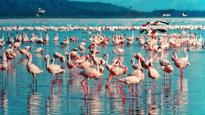 دریاچه ناکورو (Nakuru) در کنیا