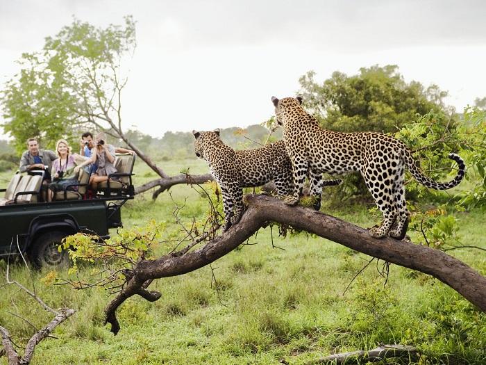 پارک ملی کروگر (Kruger) در آفریقای جنوبی
