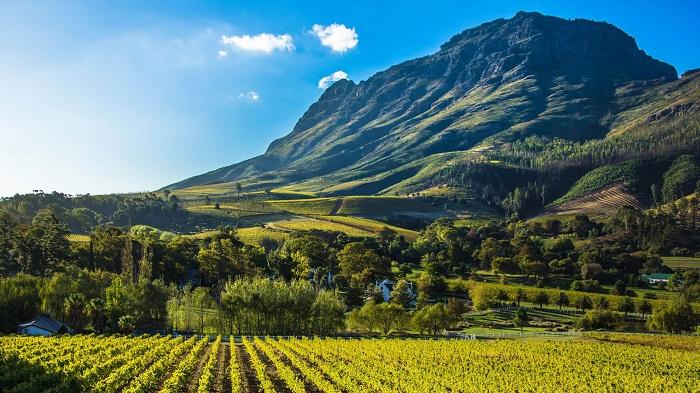 کیپ واینلندز (Cape Winelands) در آفریقای جنوبی