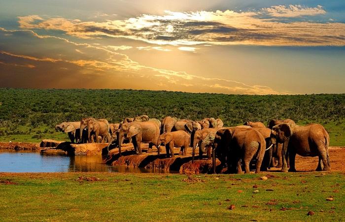 پارک ملی Addo Elephant در آفریقای جنوبی