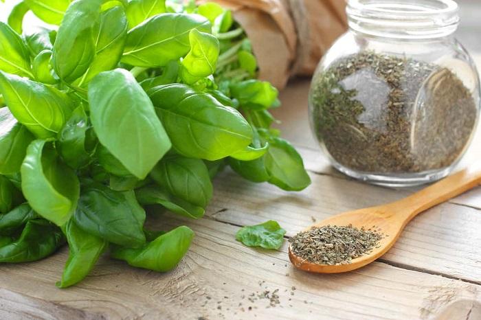 چگونه سبزی ریحان را خشک کنیم