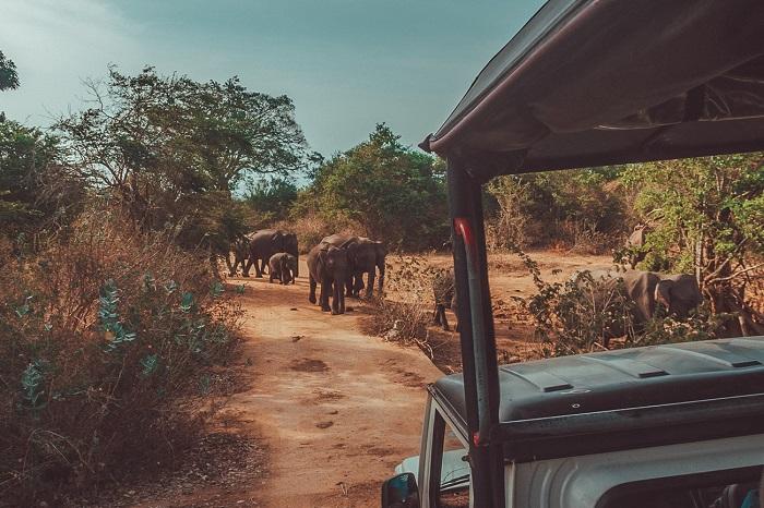 پارک ملی Udawalawe در کشور سریلانکا