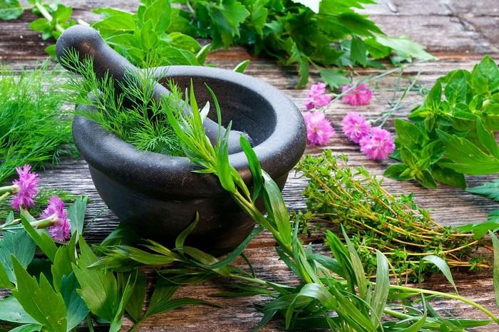 گیاهان دارویی برای ضدعفونی کردن منزل
