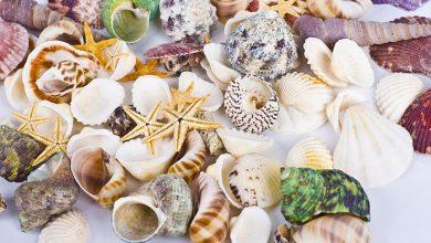 تزیین منزل با صدف دریایی