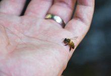 فواید نیش زنبور عسل