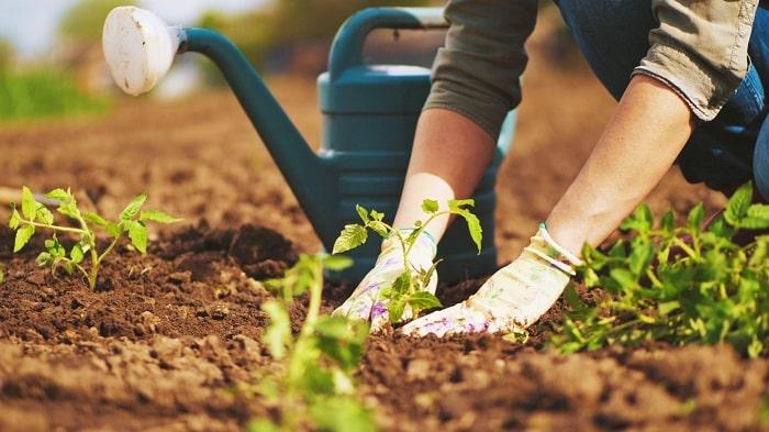 فواید باغبانی برای جسم و روان