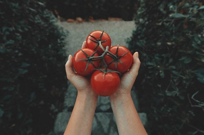 گوجه فرنگی در بارداری